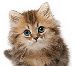 The UK's leading cat and kitten insurance providers.