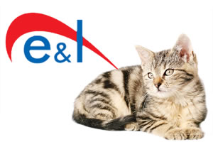 E&L - Cat and kitten insurance