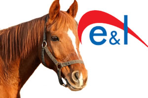 E And L - Horse and pony insurance