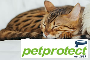 Pet Protect - Cat and kitten insurance