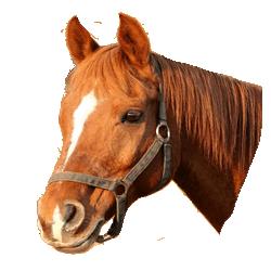 Horse & Pony Insurance