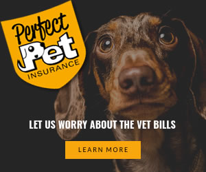Perfect Pet - Dog and puppy insurance