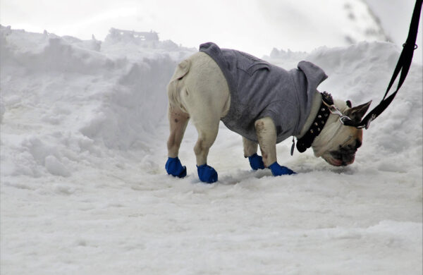 Winter warming fashion for dogs