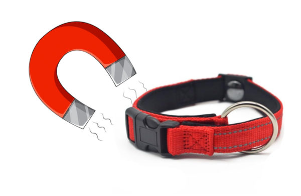 How magnetic collars could help improve pet health.