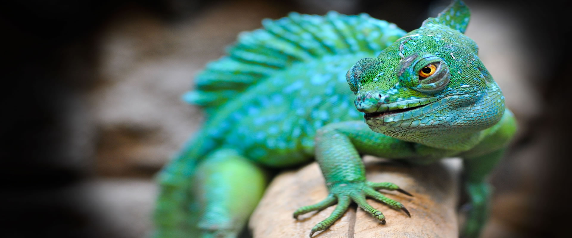 Pets Insured - Quotes snakes and reptile insurance